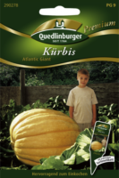 Quedlinburger Kürbis Atlantic Giant