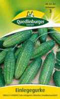 Quedlinburger Einlegegurke Libelle F1