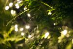 LED-Lichterkette Snakelight Länge 11 m, 550 warmweiße LED's