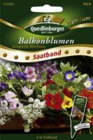 Quedlinburger Saatband Balkonblume, hängende Mischung