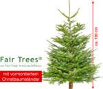 geschlagene Nordmanntanne Fair Trees, ca. 100 cm mit Holzkreuz