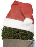 Weihnachtsmütze für Pflanzen, rot