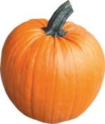 Speisekürbis Halloween