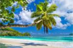FototapetePalmenstrand Seychellen