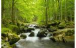 FototapeteWasserlauf im Wald