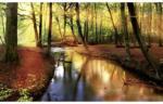 Fototapete Herbstwald mit Wasser