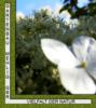 Gartenbau Mehlig